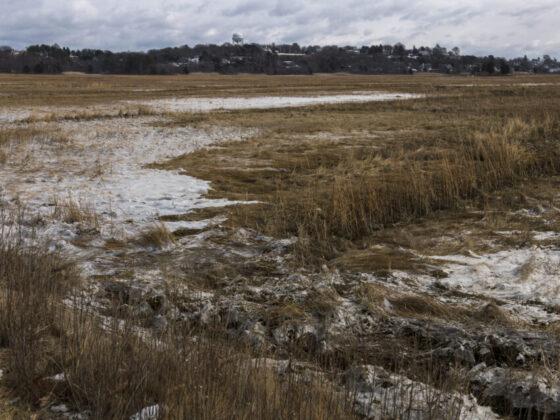 $1M federal grant to help salt marsh restoration project north of Boston