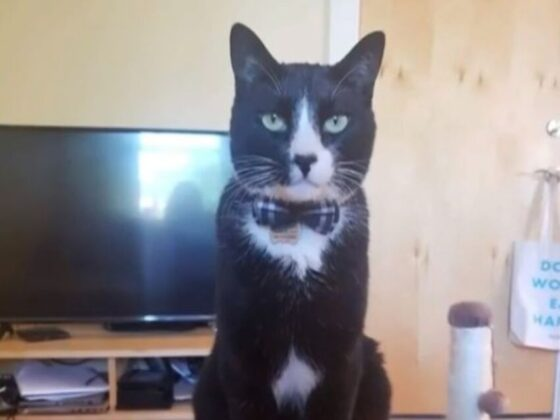 A cat was killed in Cambridge in a 'particularly disturbing' case. It may not be an isolated incident.