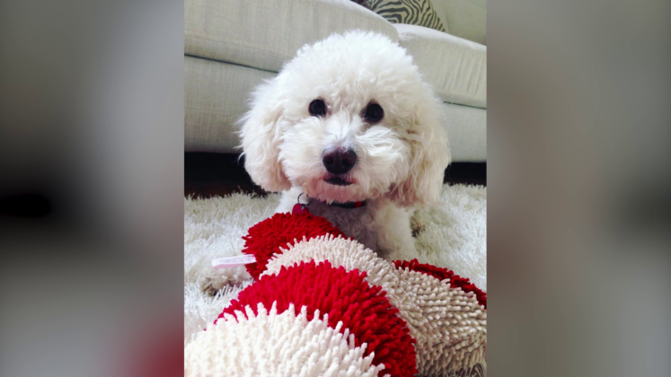 A woman took her toy poodle to PetSmart for a nail clipping. She says her beloved dog died there