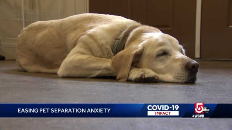 Helping pets through separation anxiety
