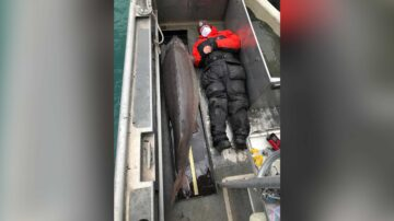 'River monster' fish caught in Detroit River may be over 100 years old