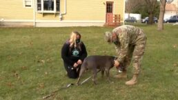 Air Force Sergeant has emotional reunion with his beloved dog after deployment