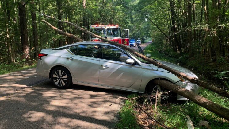 WHOA! Driver escapes crash with just minor injury after tree impales her car