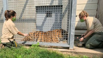 2 Boston area zoos vaccinating their animals against COVID-19