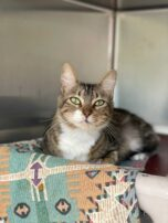 Dozens of cats rescued from Ida-ravaged Louisiana seek homes in Mass.