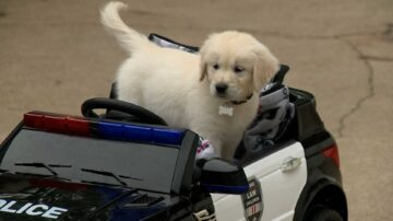 Newton police reveal name of adorable new community service dog