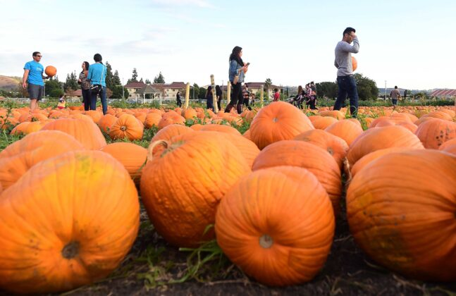 'Pumpkin has entered the chat': Why we seem to embrace fall earlier every year