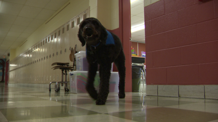 School's therapy dog helps students transition back to school